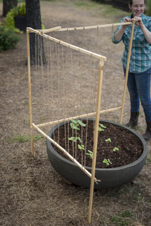 Growing Safe, Healthy Food in Containers, By P. Allen Smith - Crescent Garden